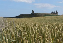 St Oswald's Way Views - Dunstanburgh Castle
