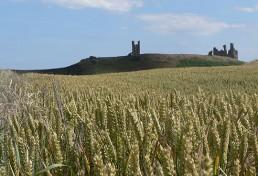 St Oswald's Way Views - Dunstanburgh Castle